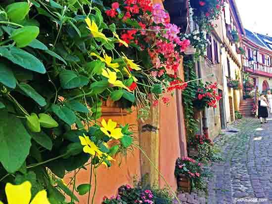 Eguisheim an Alsace village in France