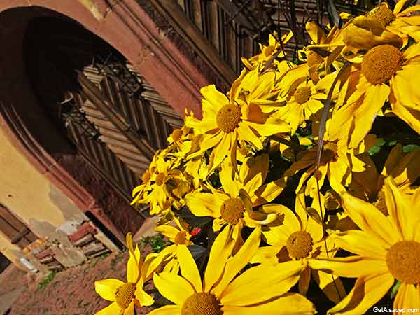 Historic Alsace village with flowers